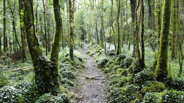 Dromore_Wood_path.JPG